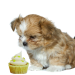 cute puppy with pupcake