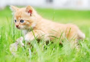 kissa_ruoholla
