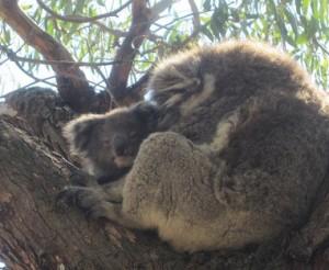 Koala Kinuskit maailmalla